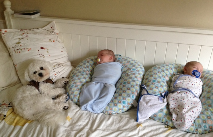 a white bichon frise sits on a daybed with two, swaddled twin boys, max and sam