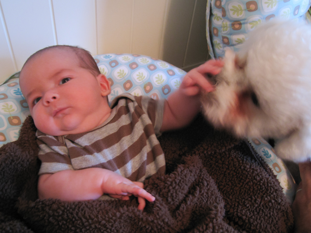 baby boy max wearing a striped shirt, sitting in a Boppy, holds back his licking older brother, a bichon frise