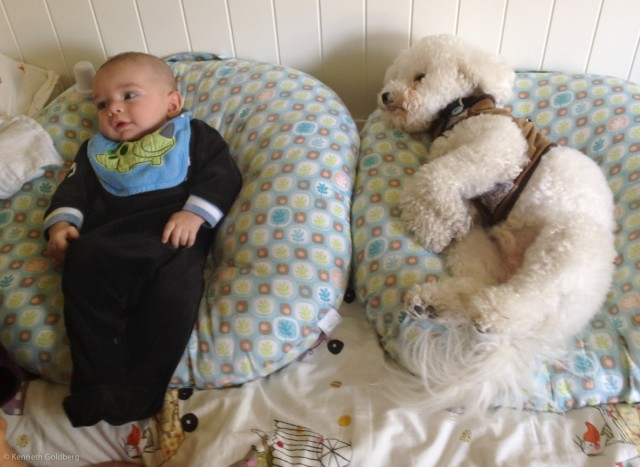 baby boy Sam wearing a dinosaur bib, sits on a Boppy Newborn Lounger next to his bichon frise dog-brother, on a second Boppy