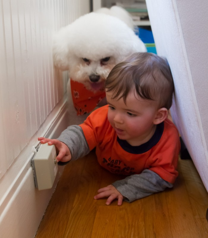 Baby boy max and his white bichon brother crawl behind the glider and find the phone jack