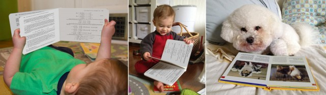 twin baby brothers Sam and Max read math and physics textbooks, while their Bichon brother studies collies.